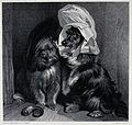 Two dogs dressed in comical human costumes. Steel engraving Wellcome V0020838.jpg