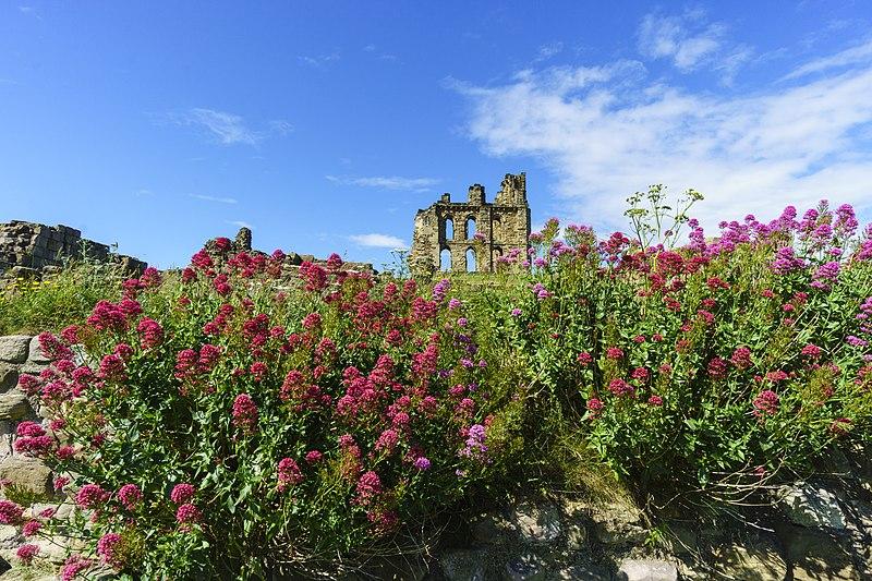 File:Tynemouth Castle 1015519.jpg