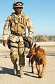 US Navy 030302-N-5362A-011 U.S. Navy working dog.jpg
