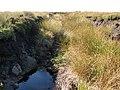 Un-named tributary of Blaeberry Burn (2) - geograph.org.uk - 949065.jpg