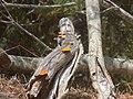 Un tronco con hongos.JPG