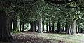 Urban forest.jpg
