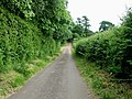 View along lane by Acrise Wood - geograph.org.uk - 865400.jpg