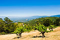 View from Ridge Winery - Santa Cruz Mountain AVA.jpg