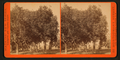 View in Holfskill's orange grove, Los Angeles, by Watkins, Carleton E., 1829-1916.png
