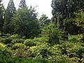 View in Jingshan Park 2.jpg