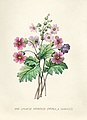 Vintage Flower illustration by Pierre-Joseph Redouté, digitally enhanced by rawpixel 92.jpg