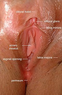 Vulva labeled.jpg