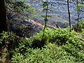 Vylet k Cernemu jezeru Sumava - 9.srpna 2010 147.JPG