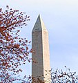 Washington Monument - with cherry blossoms - 2012-03-15 (6848968938).jpg