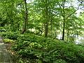 Water trench, Bremen 16.JPG