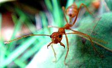 10. Ant