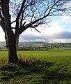 Wensleydale pasture land - geograph.org.uk - 1606603.jpg