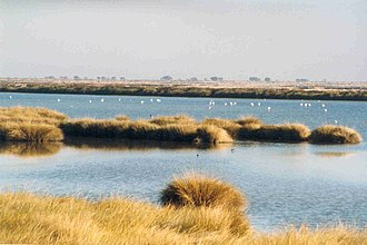 Province of Huelva - A wetland area of Donana National Park