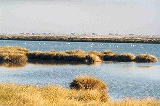 Doñana National Park - Marshes of Doñana in Huelva province