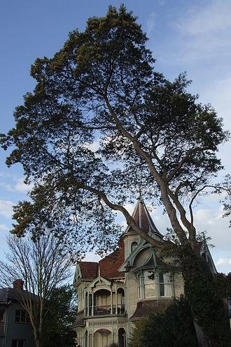 Wharetiki House - Wharetiki house in 2006