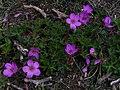 Whf purple 17.jpg