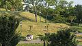 Wien 10 Kurpark Oberlaa Kurgarten h.jpg