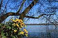 Wild Flowers at the Lake (4533973017).jpg
