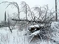 Willingen – Winter am Kyrillpfad - panoramio.jpg