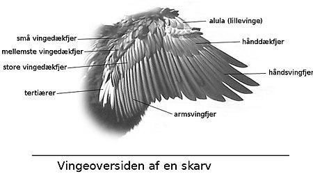 Beskrivelse af vingen