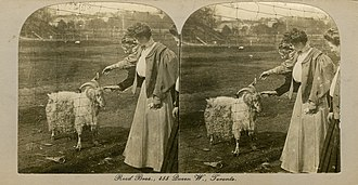 Toronto Zoo - Stereo card of a goat at the Riverdale Zoo. Opened in 1888, the Riverdale Zoo was the predecessor to the modern Toronto Zoo.