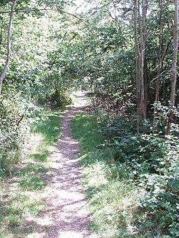 Woodland on Gerrards Cross Common - geograph.org.uk - 20889