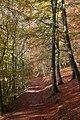 Woodland path - geograph.org.uk - 604508.jpg
