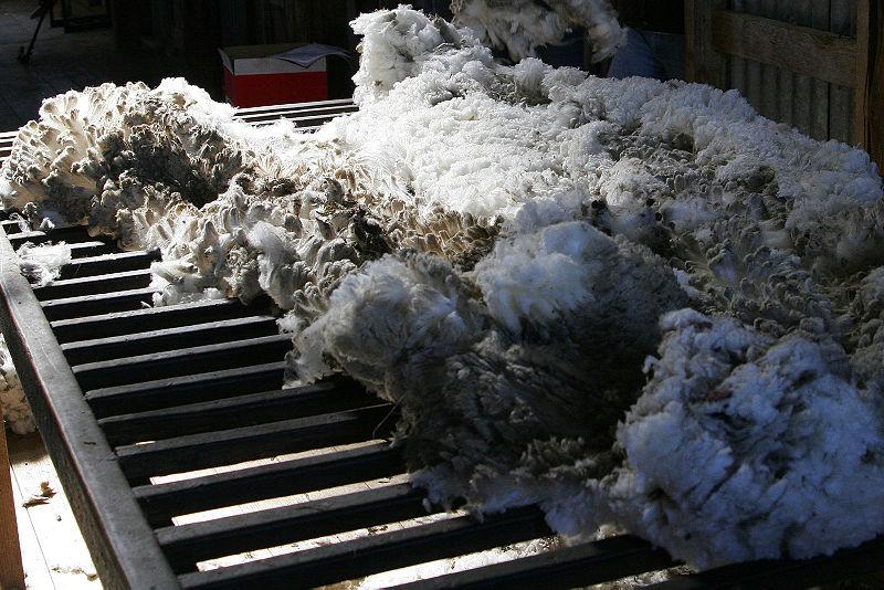 File:Wool shorn from aust merino sheep.jpg