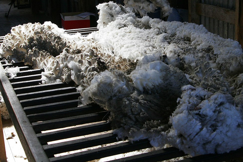 Wool shorn from aust merino sheep