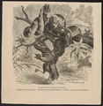 Xiphosoma caninum - 1700-1880 - Print - Iconographia Zoologica - Special Collections University of Amsterdam - UBA01 IZ11900035.tif