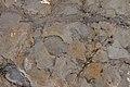 Yacimiento de La Pedraja en Mambrillas de Lara, huellas de dionosaurios, 01.jpg