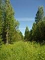 Yakshur-Bodyinskiy r-n, Udmurtskaja Respublika, Russia - panoramio (9).jpg