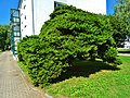 Zehistaer Straße, Pirna 123361721.jpg