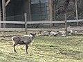 Zoo des 3 vallées - Animaux - 2015-01-02 - i3324.jpg