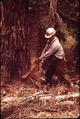 """FALLER"" D.JACKSON DROPPING RED FIR TREE - NARA - 542787.tif"