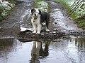 """Toby"", Lover's Retreat - geograph.org.uk - 1148679.jpg"