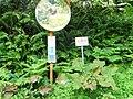 (Other), Awashimaura, Iwafune District, Niigata Prefecture 958-0061, Japan - panoramio.jpg