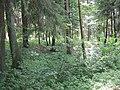 (PL) Polska - Warmia - Las Miejski w Olsztynie - The City Forest in Olsztyn (28.VIII.2012) - panoramio (18).jpg