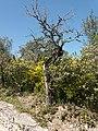 Árvore seca em meio ás plantas.jpg