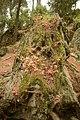 Αισθητικό Δάσος Καισαριανής 9.jpg