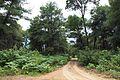 Δάσος Καλόγριας 27.jpg