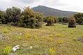 Πλατανότοπος - panoramio.jpg