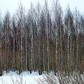 Деревня Бардабашка - panoramio (2).jpg
