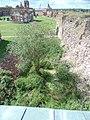 Заболоченные остатки водяных рвов цитадели. Вид сверху. Заметна часть каменной облицовки.jpg