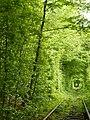 Клеванський парк, Рівненський район 2013.JPG