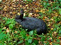 Кролик из мини-зоопарка.jpg