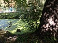 Мікрорайон Гречани, Хмельницький, Хмельницька область, Ukraine - panoramio (12).jpg