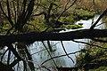 Русло реки Девица.jpg