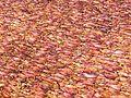 Сушеный кальмар - panoramio.jpg